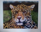 color pencil wildlife